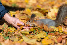 Squirrel In The Autumn Park