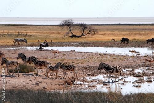 Foto op Plexiglas Afrika al Parco Nazionale Etosha in Namibia Africa