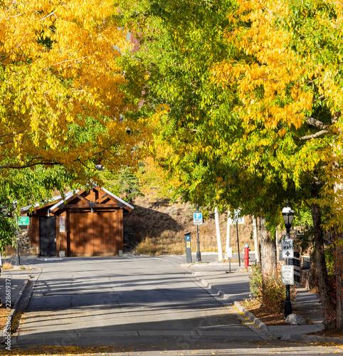 Poster Jaune Fall in Colorado