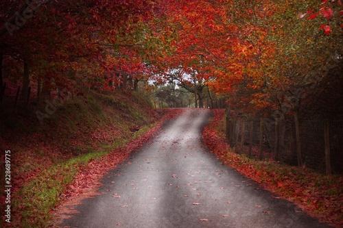 Foto op Canvas Weg in bos camino entre arboles