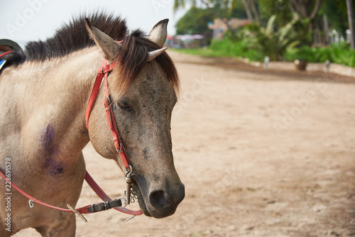Beautiful horse with seashell on head mimicking unicorn