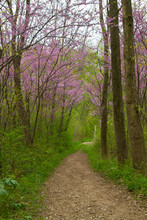 Spring Time Purple Flower Trees