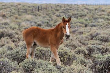 Fototapeta Cute wild Horse Foal
