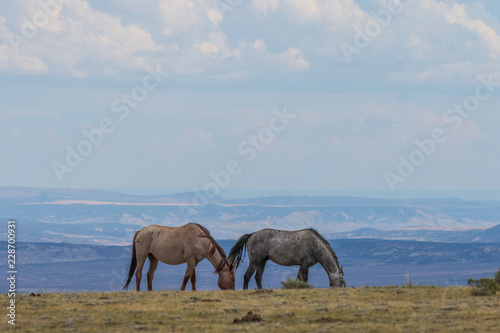 Photo  Beautiful wild Horses in Colorado