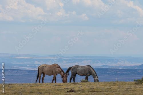 Photo  Beautiful wild Horses in Colorado