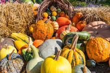 Arrangement Of Gourds And Pumpkins
