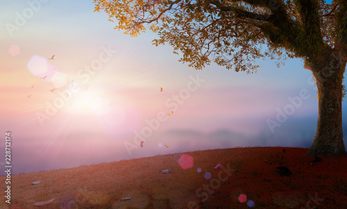 Foto auf Leinwand Rosa hell World environment day concept: Big tree on mountain over autumn sunset background