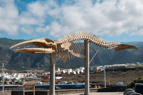Whale skeleton on Tenerife, Canary Islands -