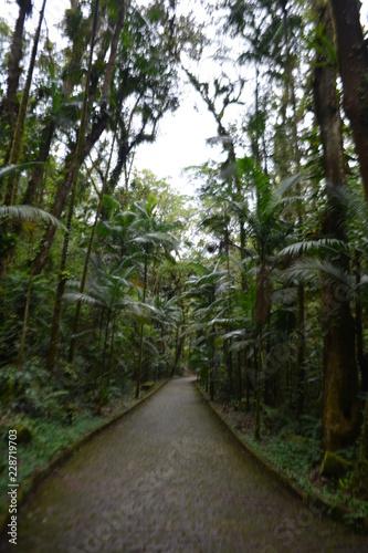 Foto op Canvas Weg in bos A natureza em suas diversas formas entre cachoeiras, cavernas e meio ambiente