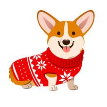 Corgi Dog Wearing A Christmas ...