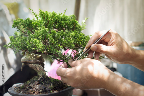 Photo sur Aluminium Bonsai Making of bonsai trees. Handmade accessories wire and scissor bonsai, bonsai tools, stand of bonsai.