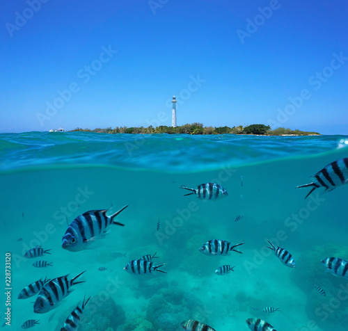 Scissortail sergeant fish underwater with Amedee island and lighthouse, split view half over and under water surface, New Caledonia, south Pacific ocean, Oceania