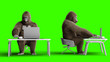 canvas print picture - Funny brown gorilla works behind a computer. Super realistic fur and hair. Green screen. 3d rendering.