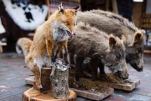 Stuffed Fox And Wild Boars, Ta...
