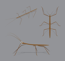 Stick Bug Poses Cartoon Vector Illustration