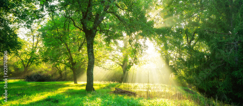 Green forest landscape background at sunrise.