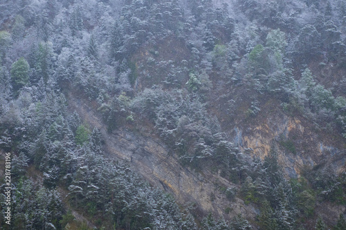 Canvas Prints Marble Forest Nature on Mountain with White Cover from Snow Shower and Mist in the Morning