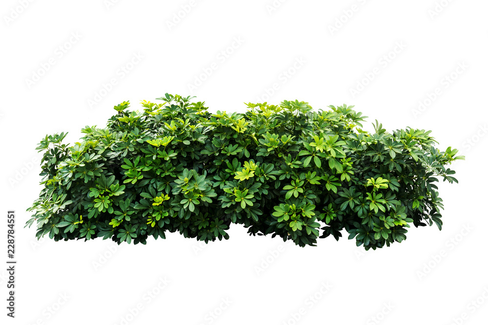 Fototapety, obrazy: plant isolated on white background with clipping path