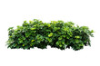Leinwandbild Motiv plant isolated on white background with clipping path