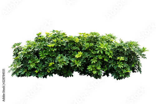 plant isolated on white background with clipping path