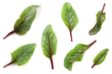 Fresh Beet Leaf Isolated On White Background. Top View. Flat Lay Pattern