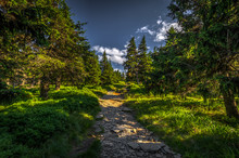 Narrow Rocky Path In The Green...