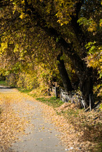 Autumn In The UK. Road In The Sunny Autumn Countryside