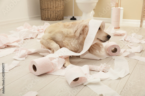 Fotografía  Cute dog playing with toilet paper in bathroom at home