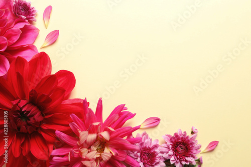 Flat lay composition with beautiful dahlia flowers and space for text on color background