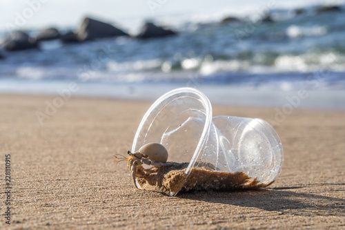 Leinwand Poster Hermit Crab living at polluted beach