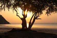 Silhouette Tree And Sea Sunset At Naiyang Beach Thailand