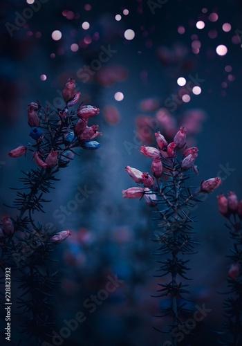 Fototapety, obrazy: christmas flowers
