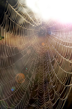 Spider's Web Closeup With Drops Of Dew At Dawn. House Of Spider