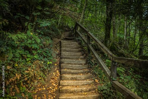 Tuinposter Weg in bos Steintreppe im Wald