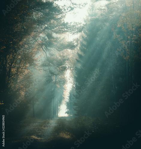 Fototapeta dark forest obraz na płótnie
