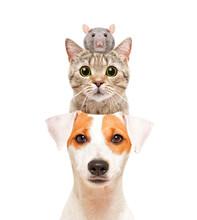 Funny Portrait Of Cute Pets, I...