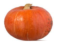 Fresh Pumpkin Isolated On Whit...