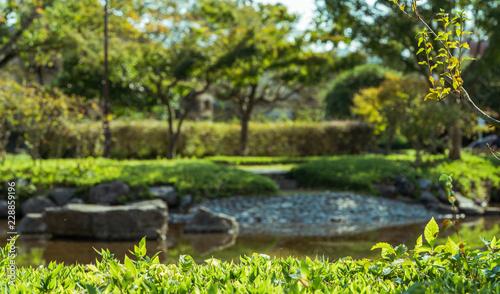 Fototapety, obrazy: pond in the garden