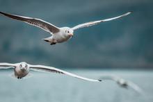 Flying Squad Of Proud White Bi...