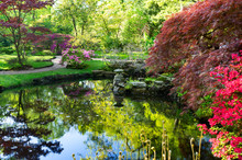 Pond With Spring Blooming Trees In Japanese Garden In The Hague, Netherlands