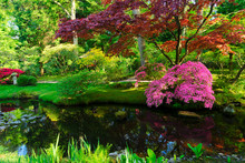 Green Grass And Blooming Trees Over River In Japanese Garden In The Hague, Netherlands