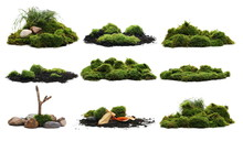 Set Green Moss Isolated On White Background And Texture, With Clipping Path