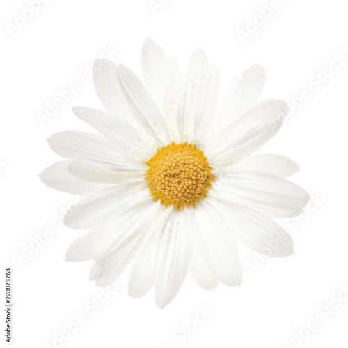 In de dag Madeliefjes Flower isolated photo white background path
