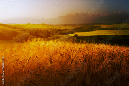 Cultivated grains and landscape.