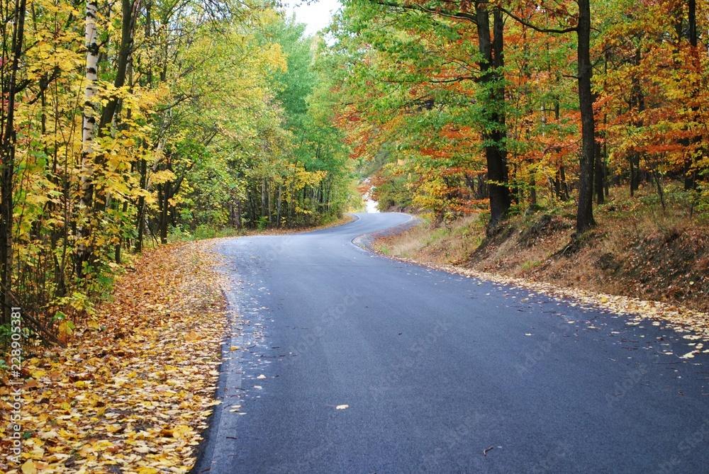 Fototapeta Podróż przez jesienny las