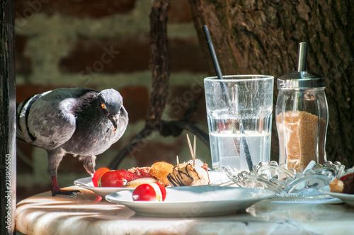 Cheeky pigeon eating food from restaurant table left over from the last customers food