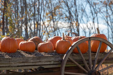 Pumpkins For Sale On Old Wagon In Autumn Sunshine,