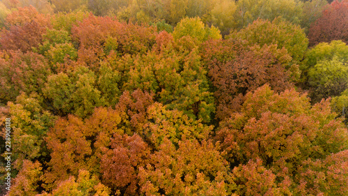 Keuken foto achterwand Bomen Aerial view of the colorful autumn city park. Beautiful view of nature.