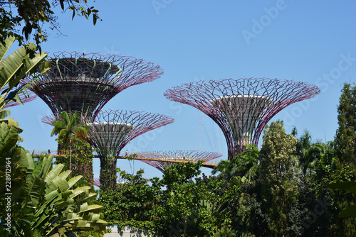 Supertrees Grove in Gardens by the Bay, famous place and tourist attraction in  Singapore, Asia