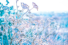 The Grass Is Frozen In Frost. ...